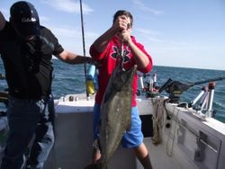 Lake Onrtario Salmon