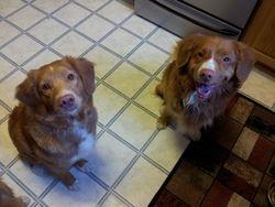 Echo and Rupert