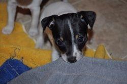 LuLu's 1st litter