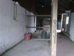 Grooming Stalls