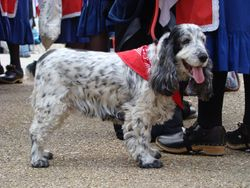 Morris doggy