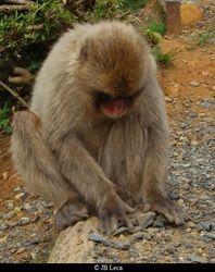 gather (Arashiyama)