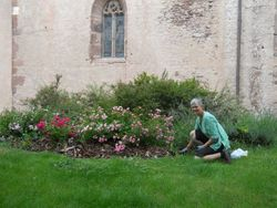 Weeding a church garden