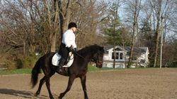 Bue's First Dressage Show