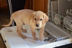 Bode, such a good little helper
