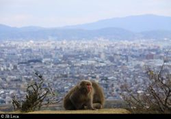 Monkeys & The City