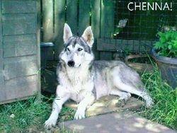 Chenna