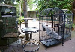 Quality cages to suit all birds