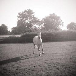 mare in the field
