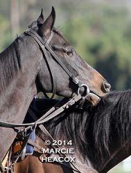 Pony Headrest