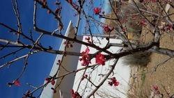 Blooms at Tubac