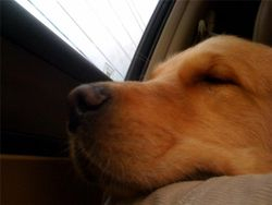 The ride home from the birthday bash! He's pooped!