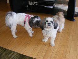 Coco and Jazmyn