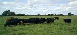 The Honeycombe Herd