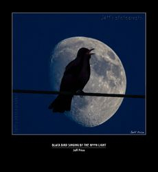 Black Bird singing by the moon light