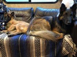 Ripple and Finn relaxing