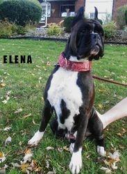 MS ELENA OCT 2012