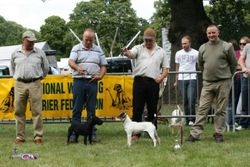 OPEN SHOW BEST TERRIER (right) & RESERVE.