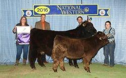 Grand Champion Cow/calf