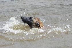 Jolt swimming