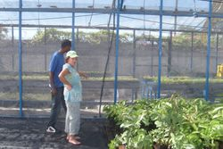 Barbara in the FFP agriculture project greenhouses