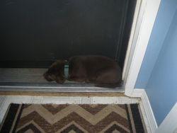 Green at the door