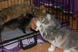 Angelina fant ut at leken var morsommere enn kattungene!