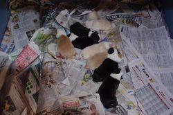 Mischa's 9 babies