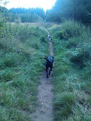 Up at the forest with Toto