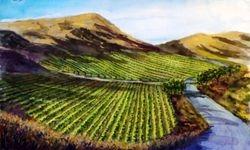 Vineyard near Los Olivos (Also see VC38)