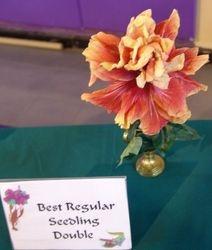 BEST REGULAR SEEDLING DOUBLE - 35-07- Bobby Dupont/Fr. Robert Gerlich, Plaquemine & New Orleans, LA.