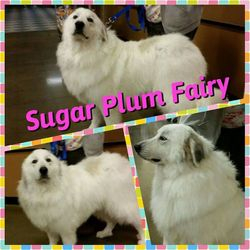 Sugar Plum Fairy-LOOK AT HER NOW!