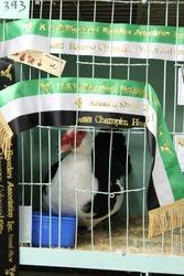 Reserve Champion Bird in show