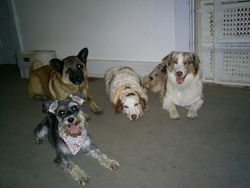 What a nice group of dogs.