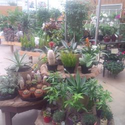Tropical house plants looking great