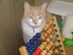 Oscar bats at the beads