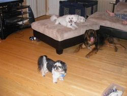 Monte, Muffy,Jack and Cujo