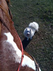 Summer 2010 Me & Koda, out for a ride