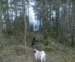 Ingeborg og fremfor henne lakrishundene
