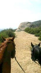 Horses in La Cresta