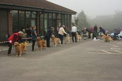 Veteran Dog Entry