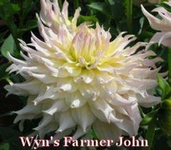 Wyn's Farmer John-AA ID LtBl W/L/Y