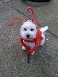 Bina in her Halloween costume