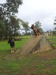 Eko at the park with Razzle