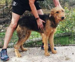 Gwen:  795 companion or $1095 intact breeder