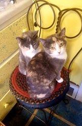 GABBY & GIDGET -- Adoption Pending!