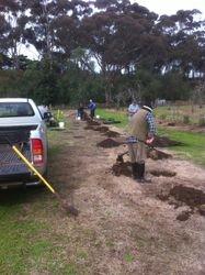 Planting Plums