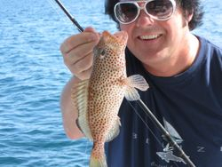 Strawberry Marlin?.....actually a Strawberry Grouper.