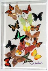 Medium sized lucite frame with moth/butterfly mix