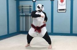 Christmas Panda doing kata